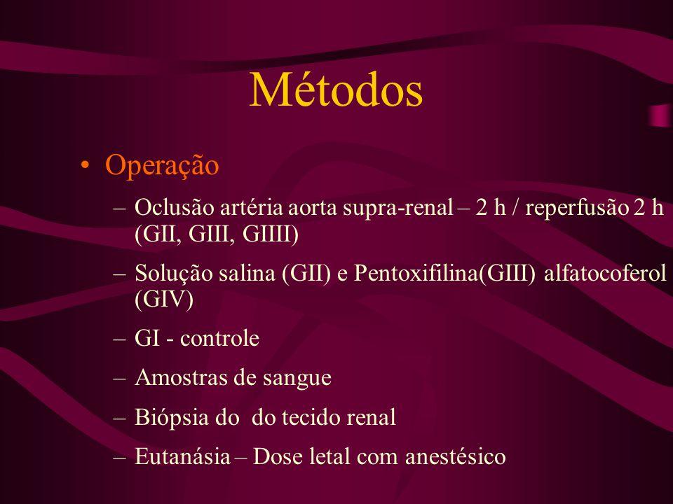 Métodos Operação. Oclusão artéria aorta supra-renal – 2 h / reperfusão 2 h (GII, GIII, GIIII)