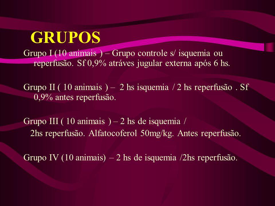 GRUPOS Grupo I (10 animais ) – Grupo controle s/ isquemia ou reperfusão. Sf 0,9% atráves jugular externa após 6 hs.