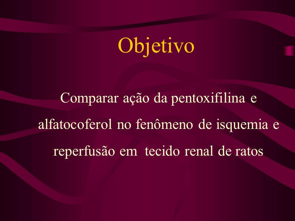Objetivo Comparar ação da pentoxifilina e alfatocoferol no fenômeno de isquemia e reperfusão em tecido renal de ratos.