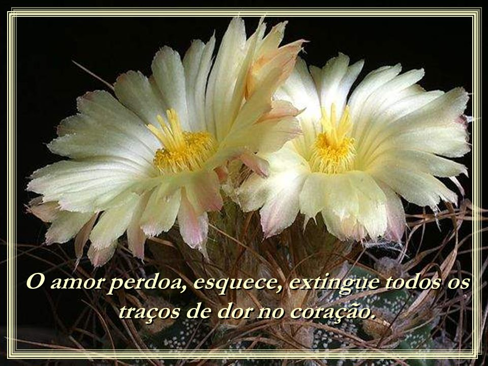 O amor perdoa, esquece, extingue todos os traços de dor no coração.