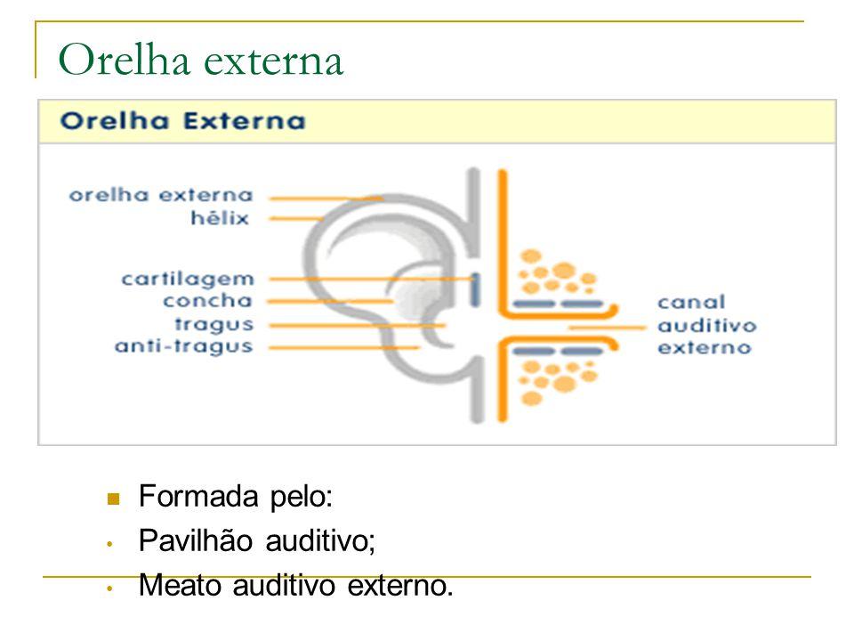 Orelha externa Formada pelo: Pavilhão auditivo;