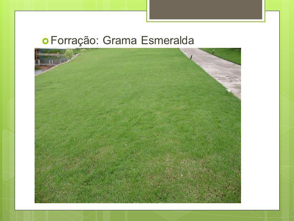 Forração: Grama Esmeralda