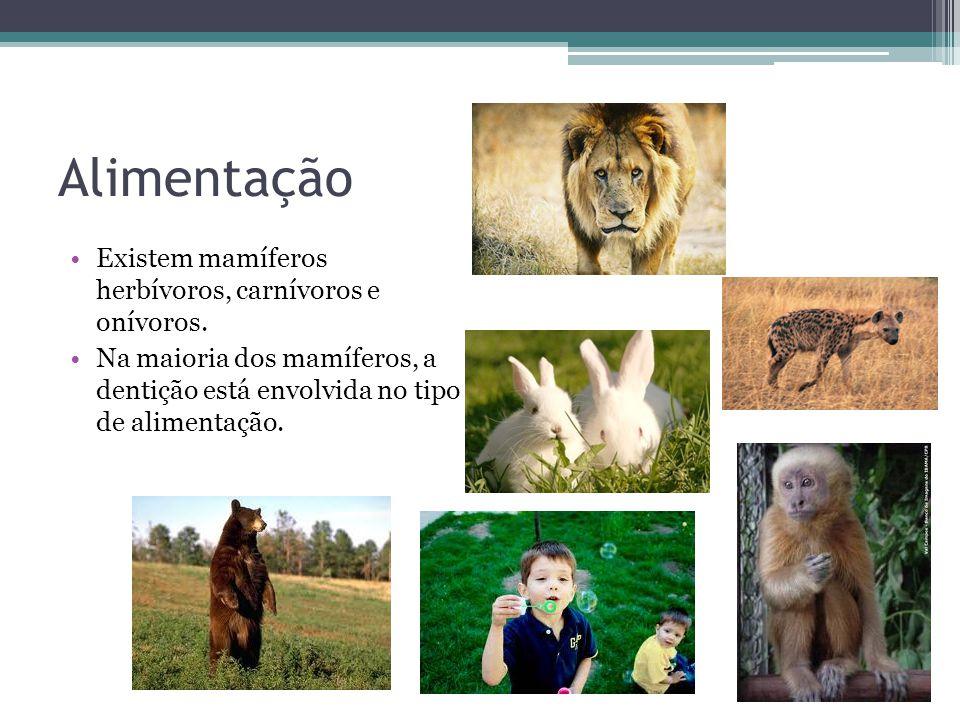Alimentação Existem mamíferos herbívoros, carnívoros e onívoros.