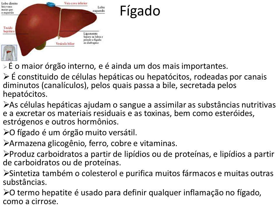 Fígado É o maior órgão interno, e é ainda um dos mais importantes.