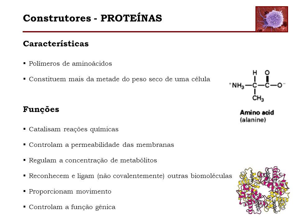 Construtores - PROTEÍNAS