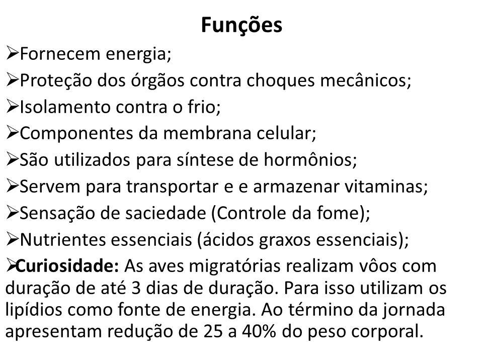 Funções Fornecem energia;