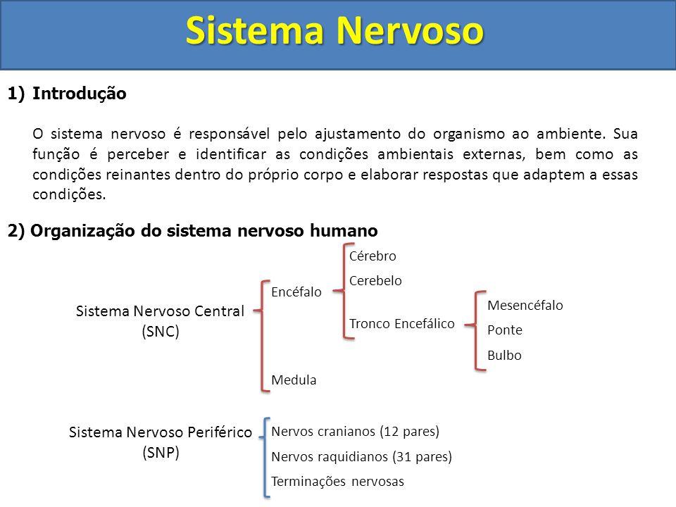 Sistema Nervoso Introdução