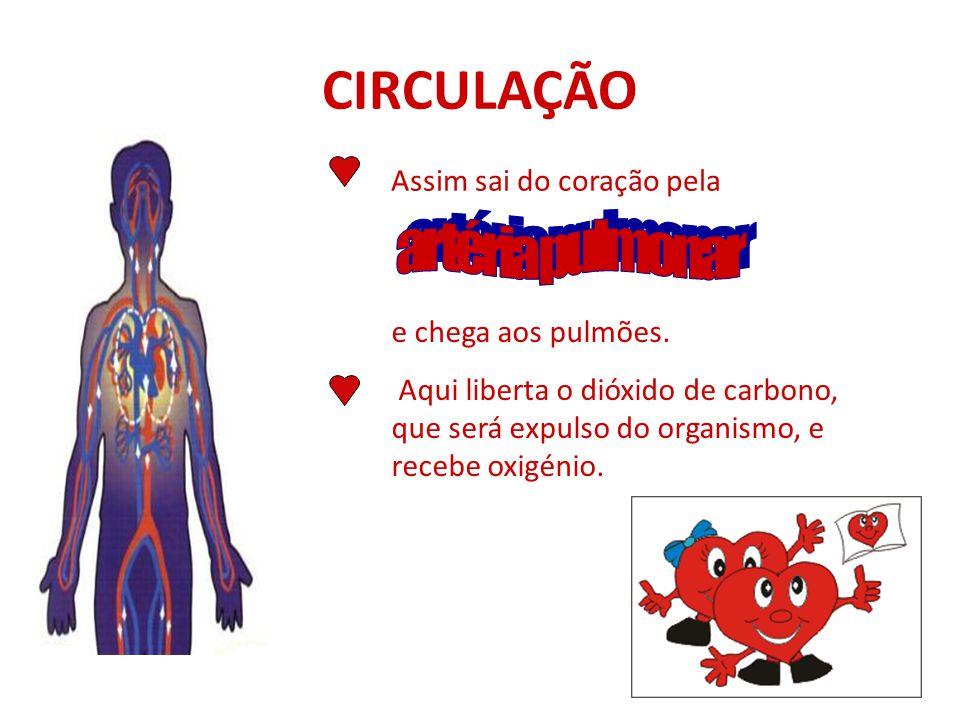 CIRCULAÇÃO artéria pulmonar Assim sai do coração pela