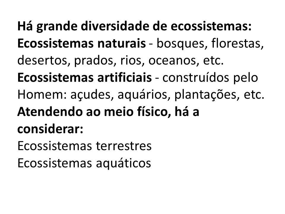 Há grande diversidade de ecossistemas: Ecossistemas naturais - bosques, florestas, desertos, prados, rios, oceanos, etc.