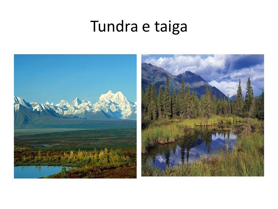 Tundra e taiga