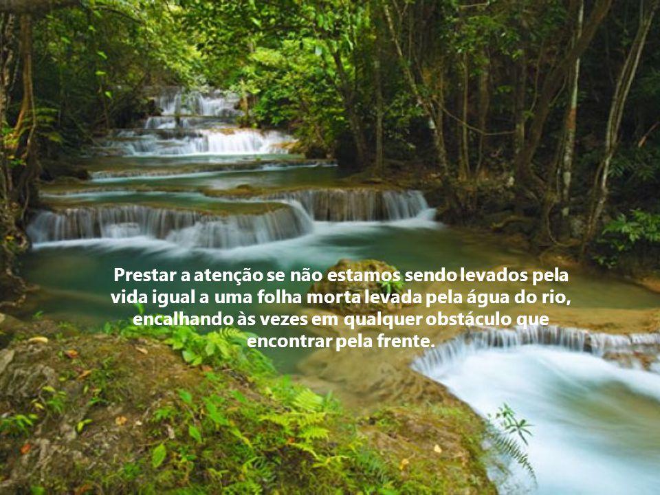 Prestar a atenção se não estamos sendo levados pela vida igual a uma folha morta levada pela água do rio, encalhando às vezes em qualquer obstáculo que encontrar pela frente.