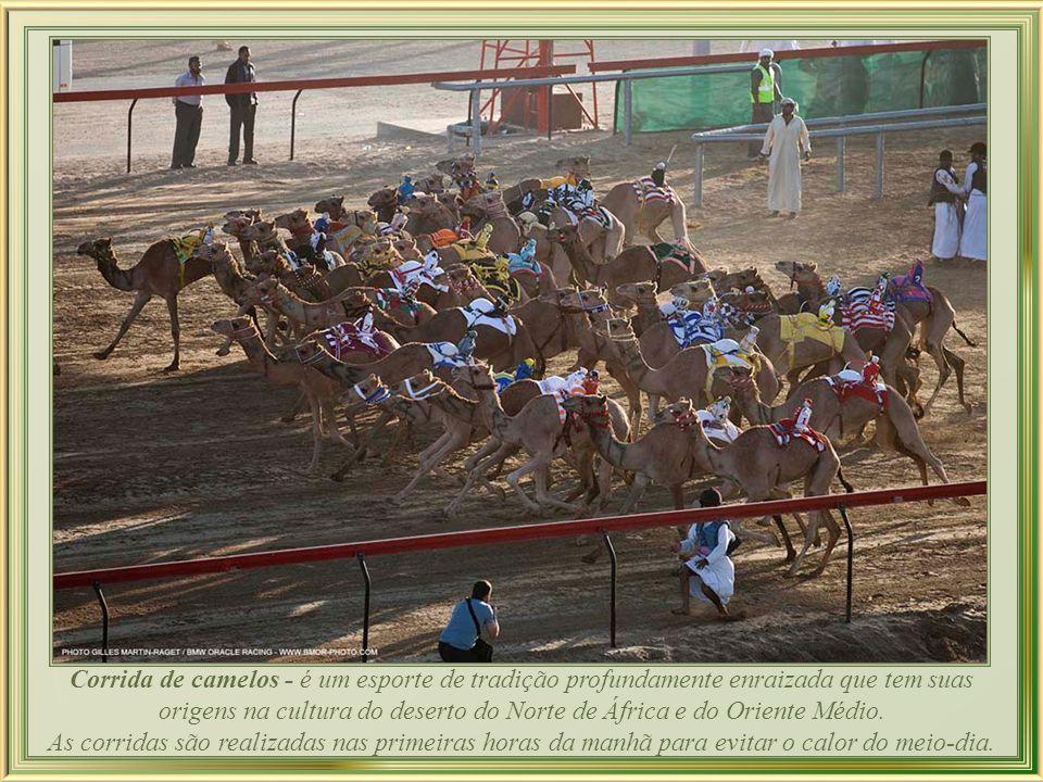 Corrida de camelos - é um esporte de tradição profundamente enraizada que tem suas origens na cultura do deserto do Norte de África e do Oriente Médio.