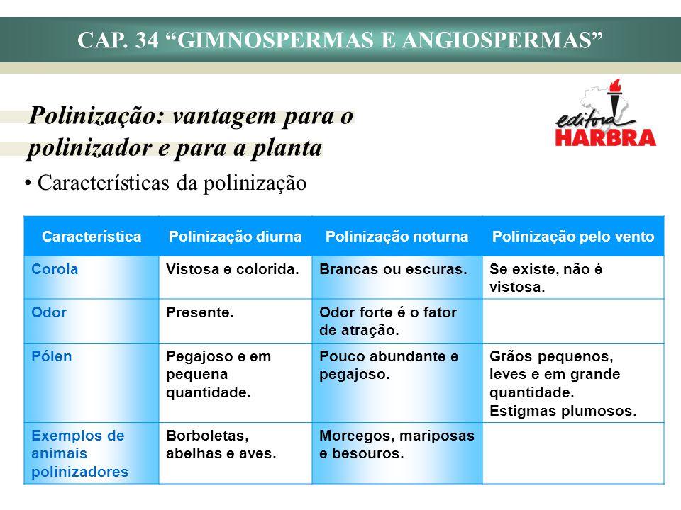 CAP. 34 GIMNOSPERMAS E ANGIOSPERMAS Polinização pelo vento