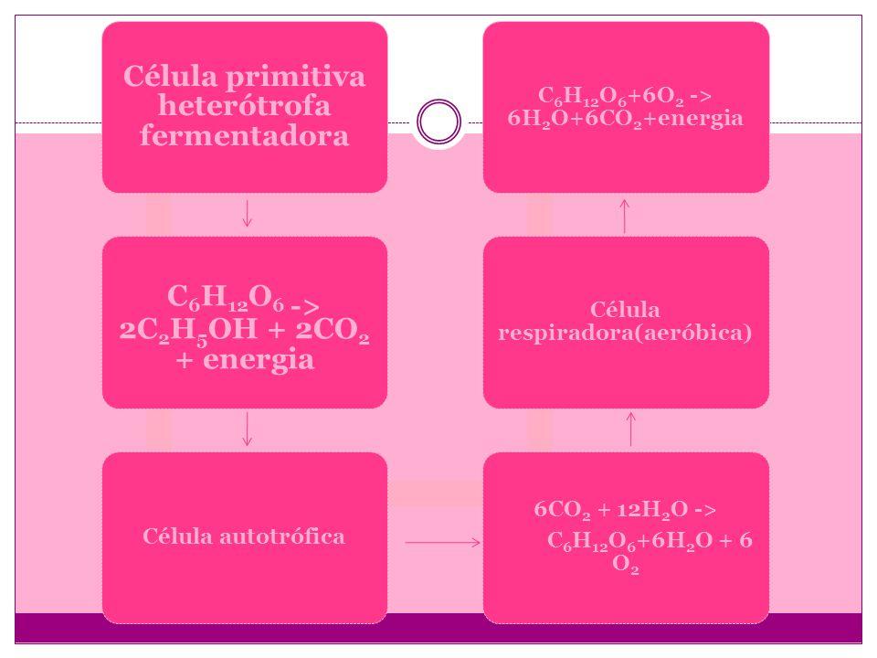 Célula primitiva heterótrofa fermentadora