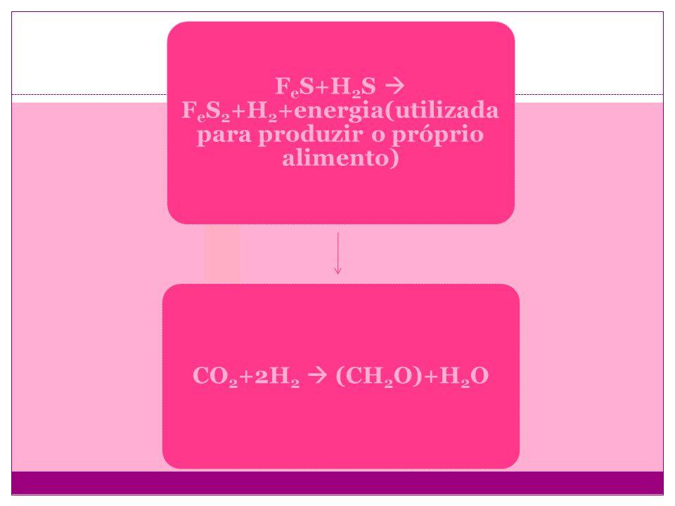 FeS+H2S  FeS2+H2+energia(utilizada para produzir o próprio alimento)
