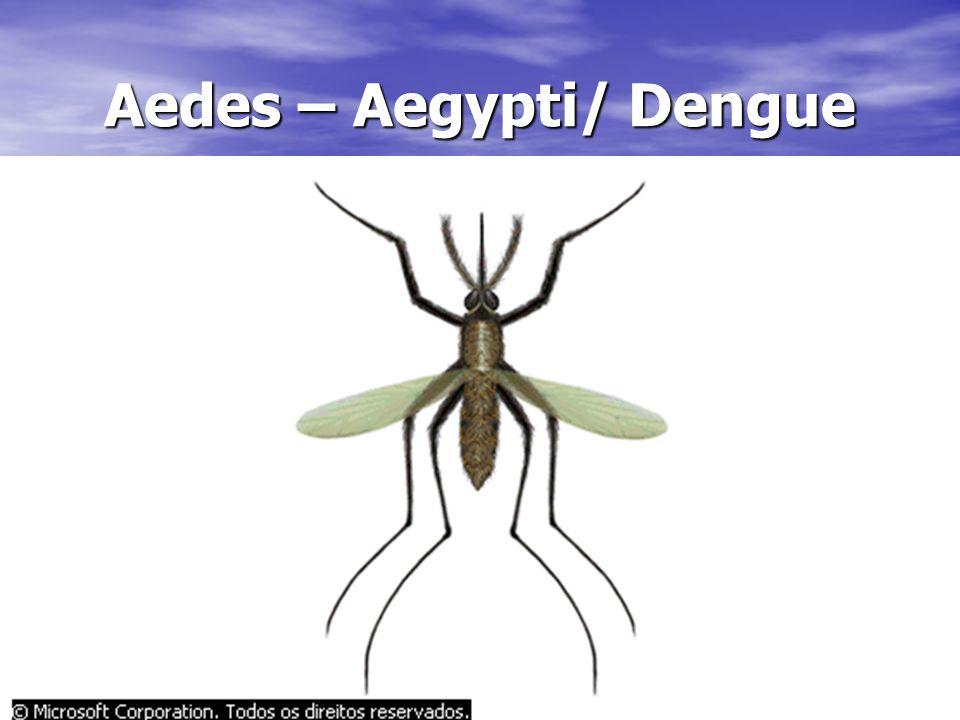Aedes – Aegypti/ Dengue