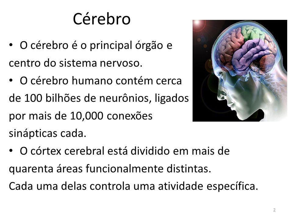 Cérebro O cérebro é o principal órgão e centro do sistema nervoso.