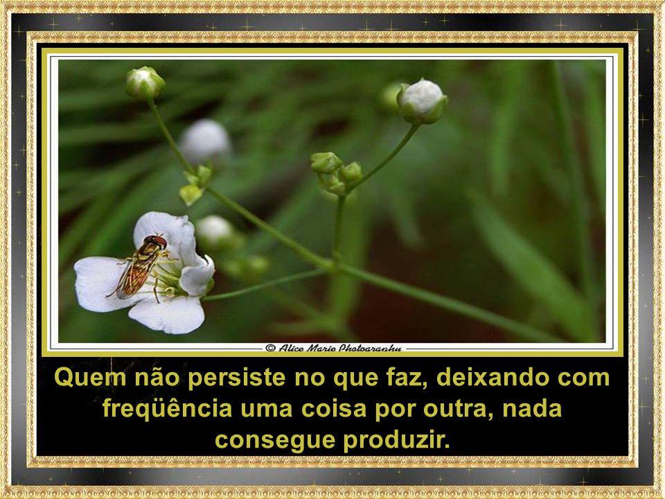 Quem não persiste no que faz, deixando com freqüência uma coisa por outra, nada consegue produzir.