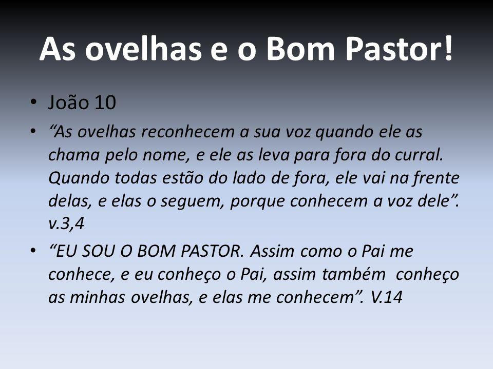 As ovelhas e o Bom Pastor!