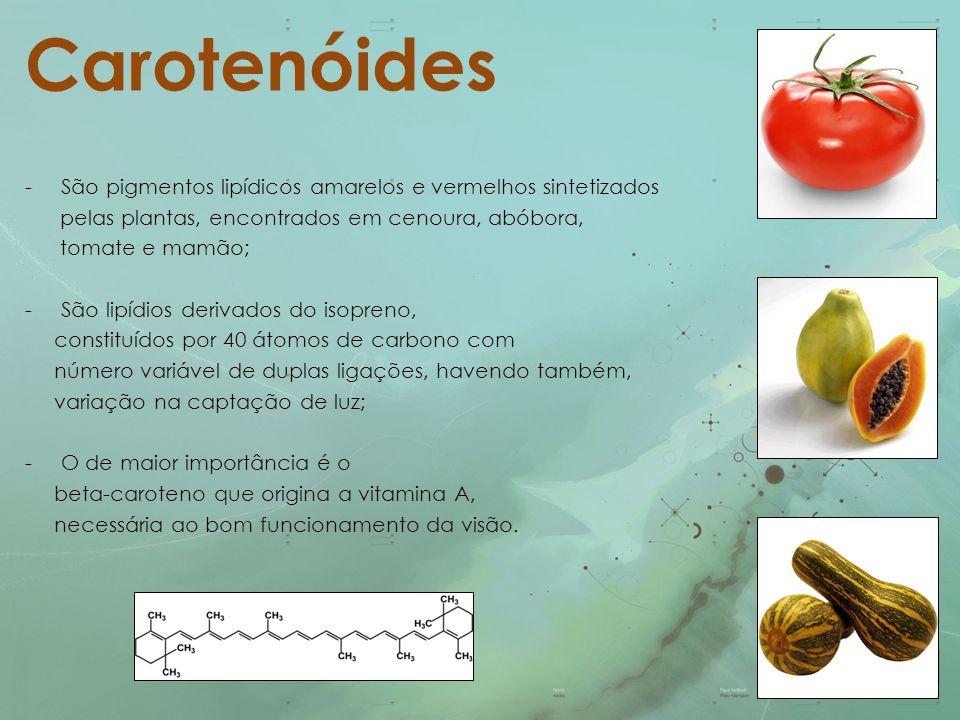 Carotenóides São pigmentos lipídicos amarelos e vermelhos sintetizados