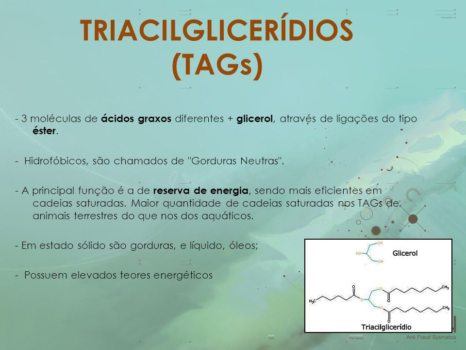 TRIACILGLICERÍDIOS (TAGs)
