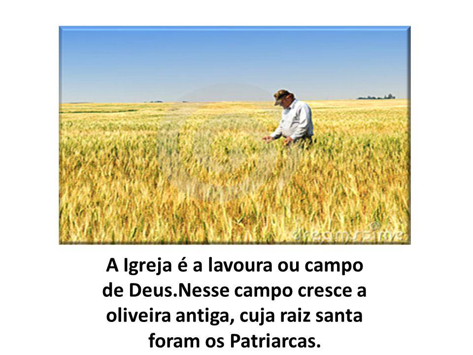 A Igreja é a lavoura ou campo de Deus