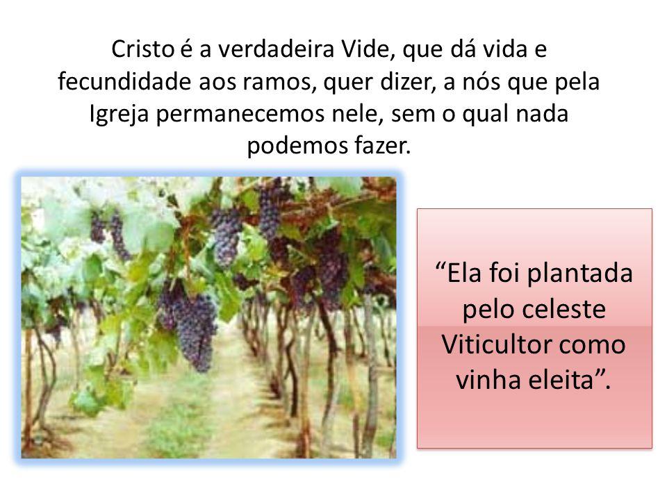 Ela foi plantada pelo celeste Viticultor como vinha eleita .