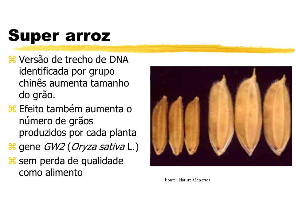 Super arroz Versão de trecho de DNA identificada por grupo chinês aumenta tamanho do grão.