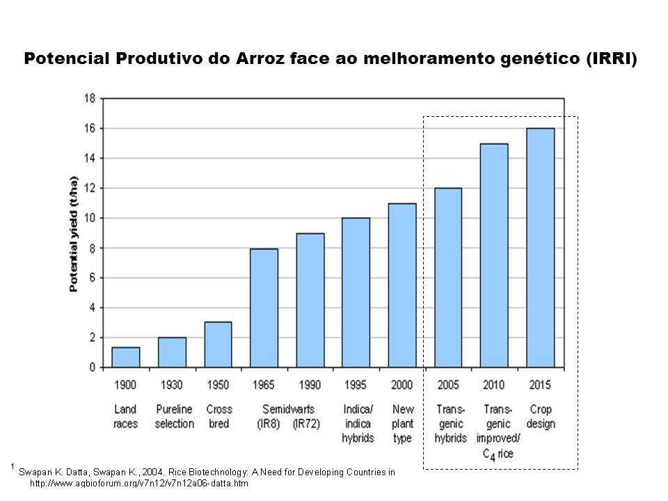 Potencial Produtivo do Arroz face ao melhoramento genético (IRRI)