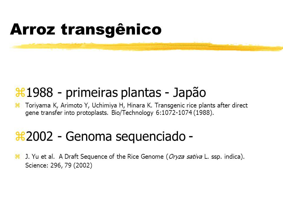 Arroz transgênico 1988 - primeiras plantas - Japão