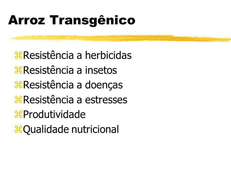 Arroz Transgênico Resistência a herbicidas Resistência a insetos