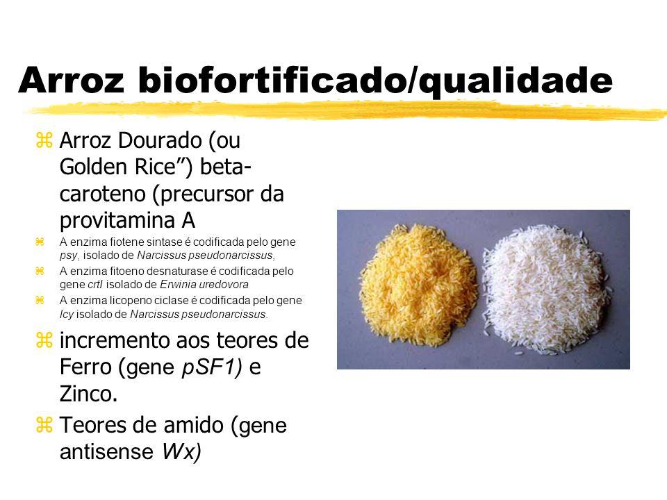 Arroz biofortificado/qualidade