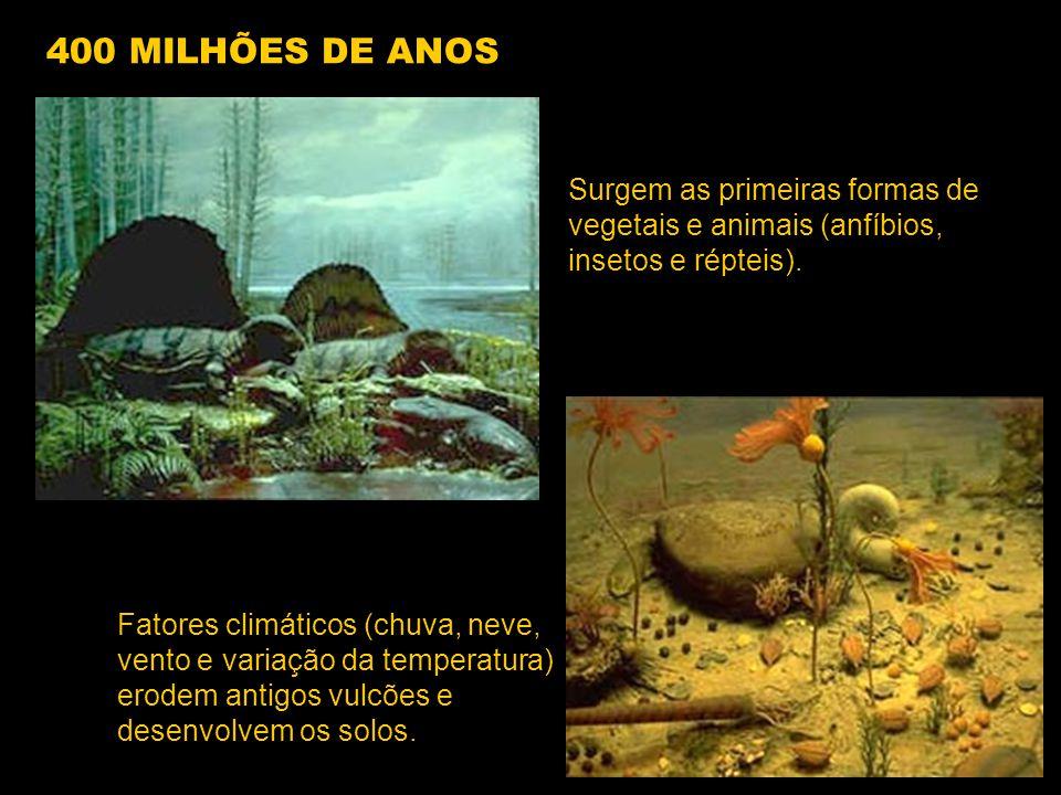 400 MILHÕES DE ANOS Surgem as primeiras formas de vegetais e animais (anfíbios, insetos e répteis).