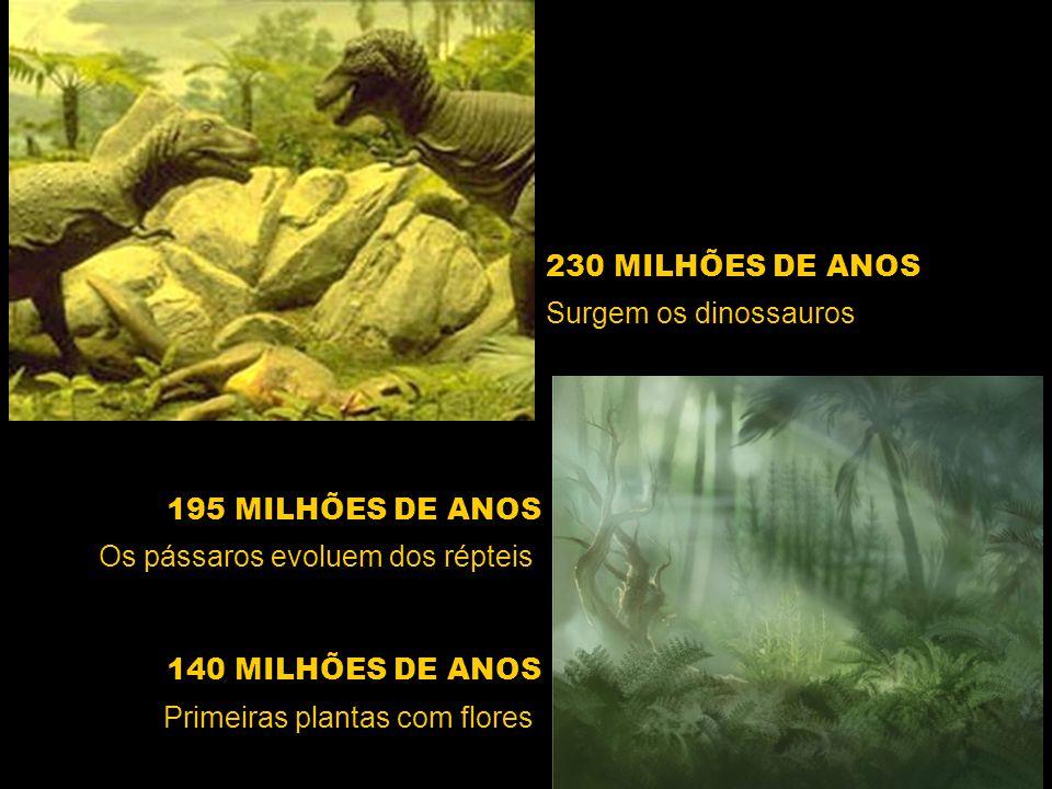 230 MILHÕES DE ANOS Surgem os dinossauros. 195 MILHÕES DE ANOS. Os pássaros evoluem dos répteis. 140 MILHÕES DE ANOS.