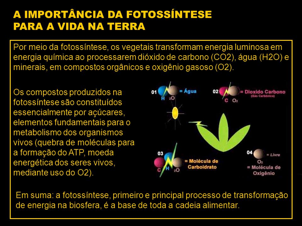 A IMPORTÂNCIA DA FOTOSSÍNTESE PARA A VIDA NA TERRA