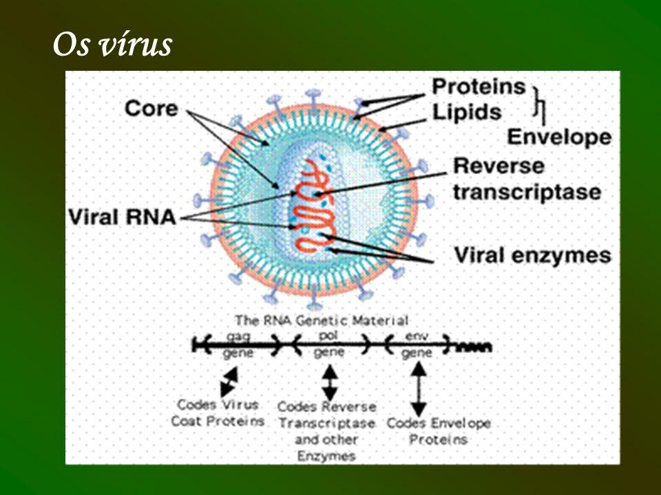 Os vírus