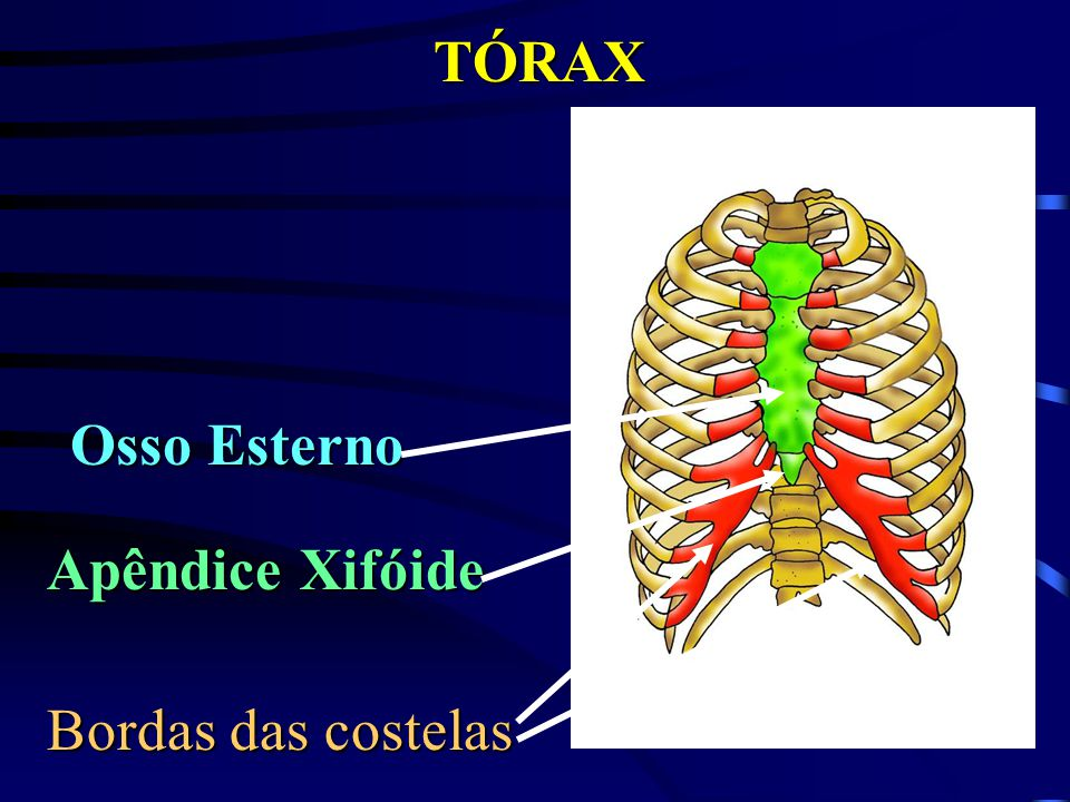 TÓRAX Osso Esterno Apêndice Xifóide Bordas das costelas