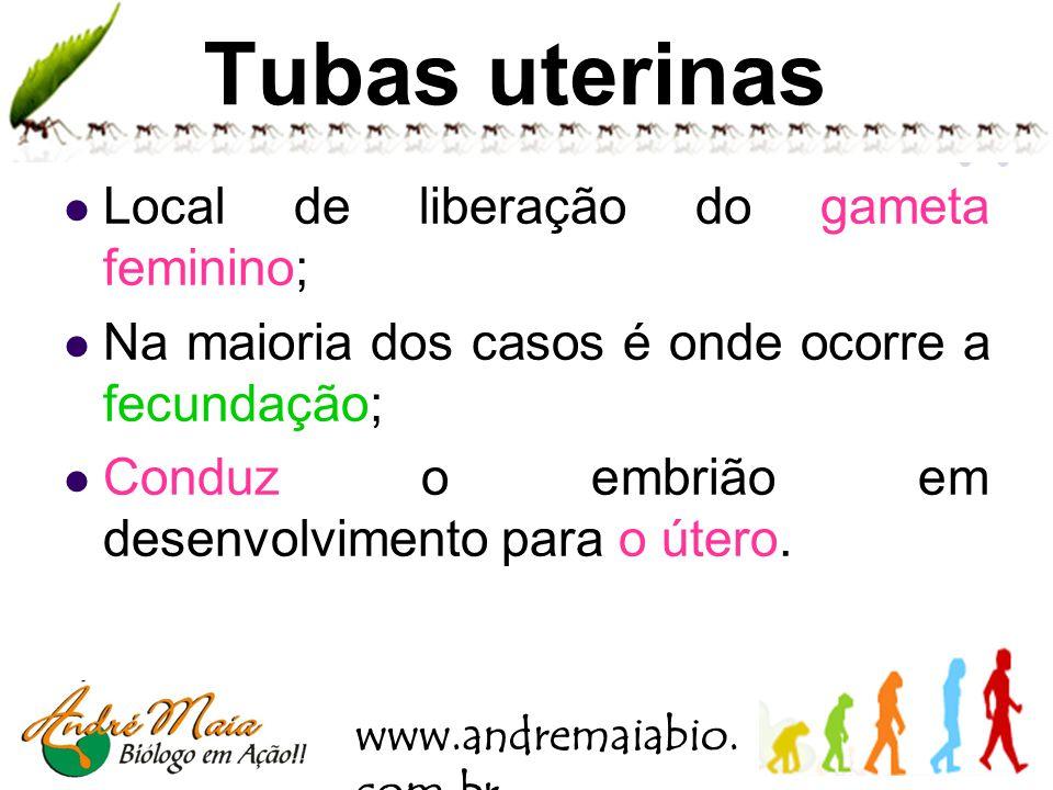 Tubas uterinas Local de liberação do gameta feminino;