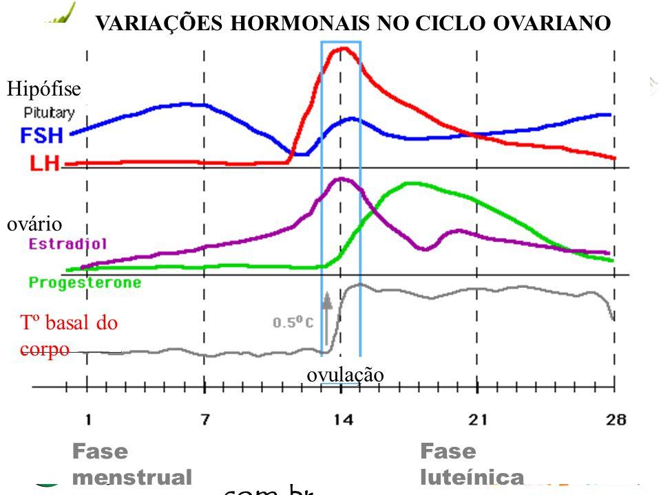 VARIAÇÕES HORMONAIS NO CICLO OVARIANO