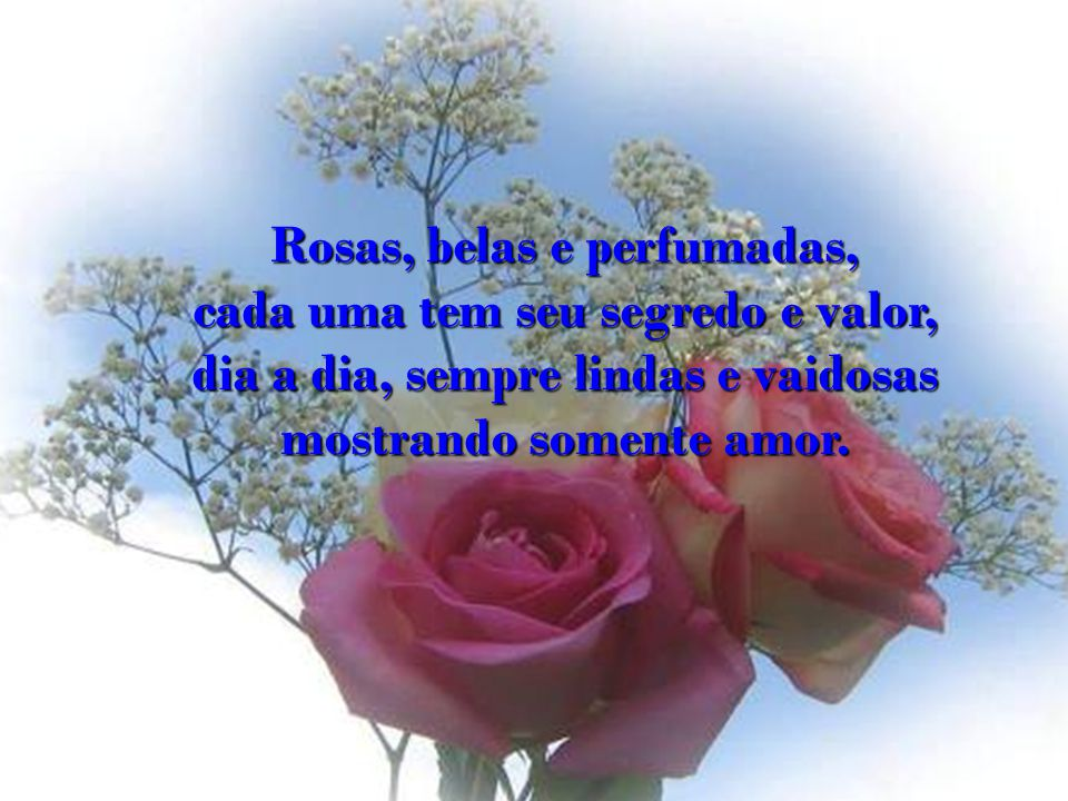 Rosas, belas e perfumadas, cada uma tem seu segredo e valor,