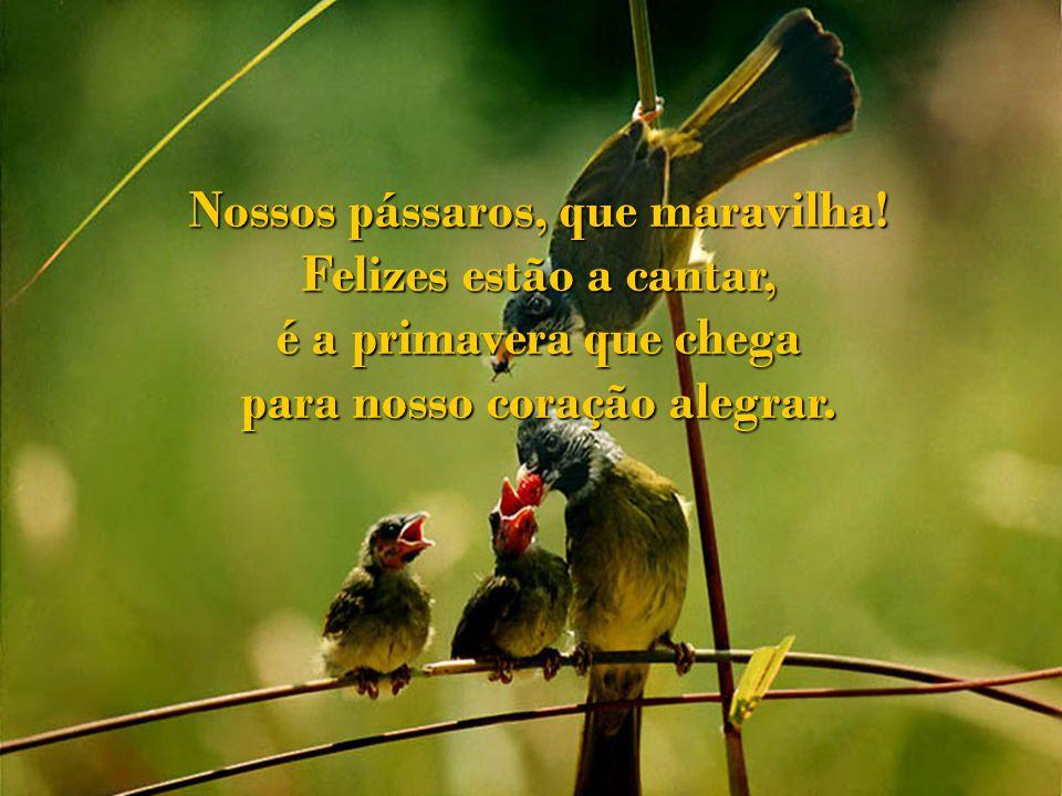 Nossos pássaros, que maravilha! para nosso coração alegrar.