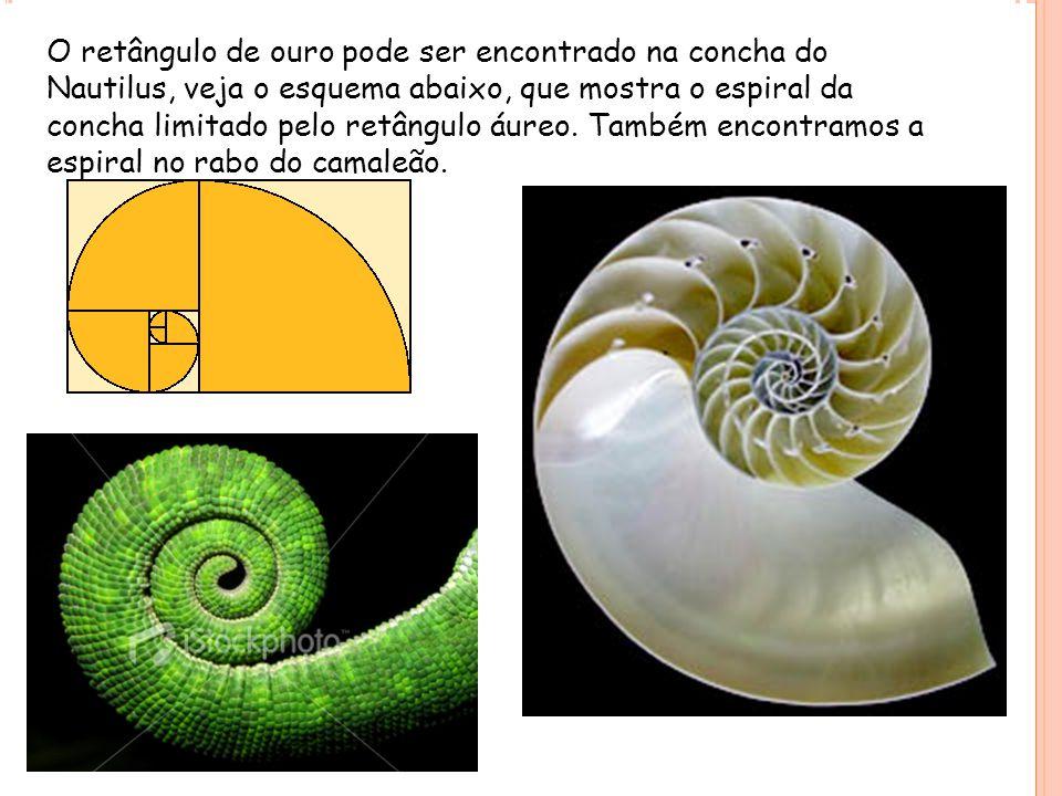 O retângulo de ouro pode ser encontrado na concha do Nautilus, veja o esquema abaixo, que mostra o espiral da concha limitado pelo retângulo áureo.