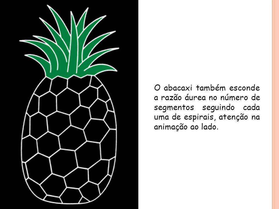 O abacaxi também esconde a razão áurea no número de segmentos seguindo cada uma de espirais, atenção na animação ao lado.