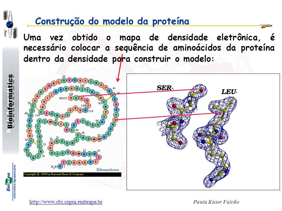 Construção do modelo da proteína