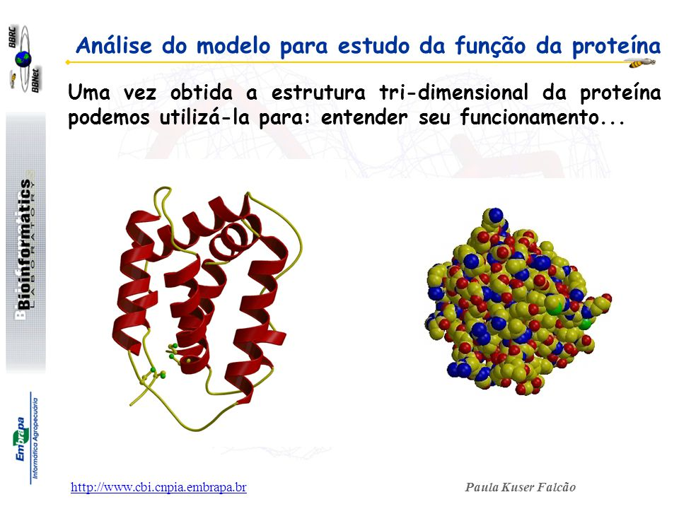 Análise do modelo para estudo da função da proteína