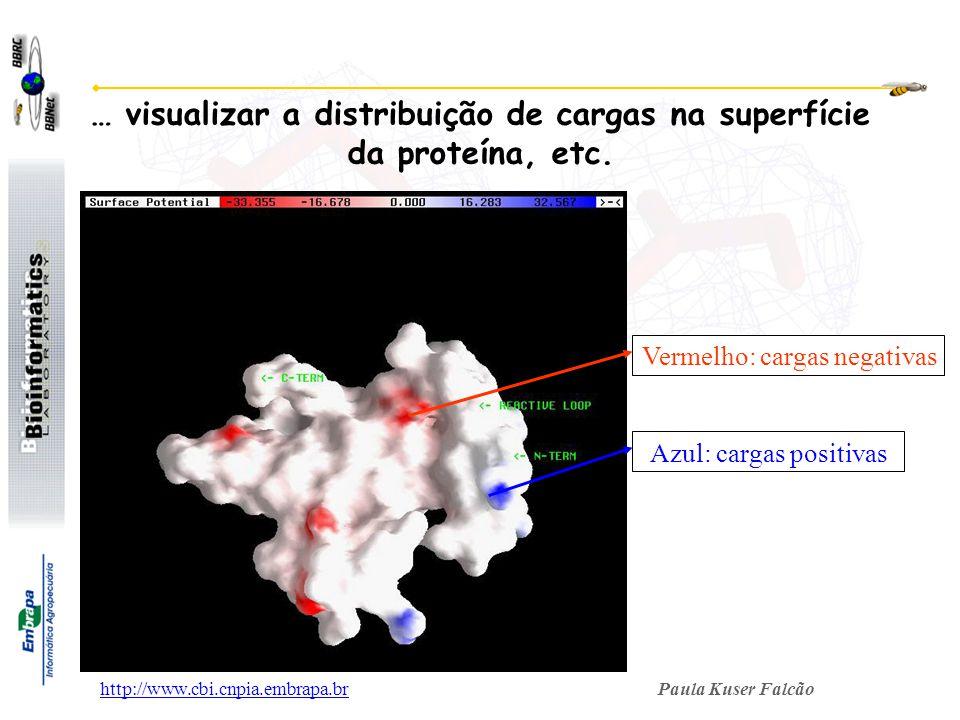 … visualizar a distribuição de cargas na superfície da proteína, etc.