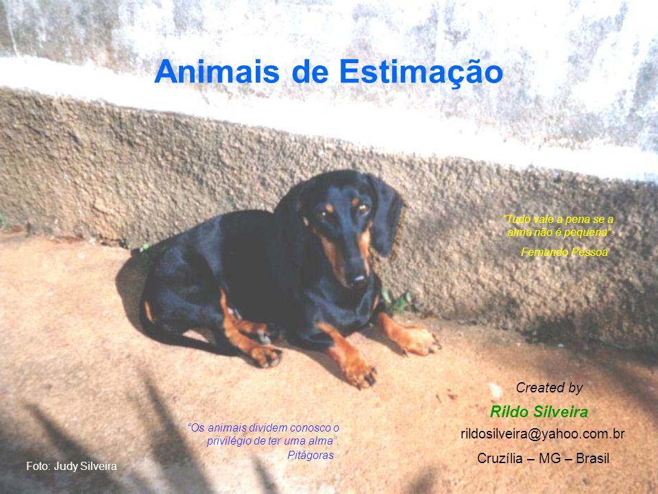 Animais de Estimação Rildo Silveira Created by