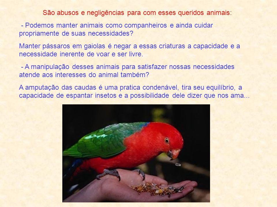 São abusos e negligências para com esses queridos animais:
