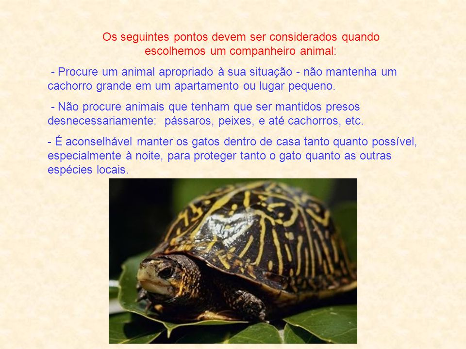 Os seguintes pontos devem ser considerados quando escolhemos um companheiro animal: