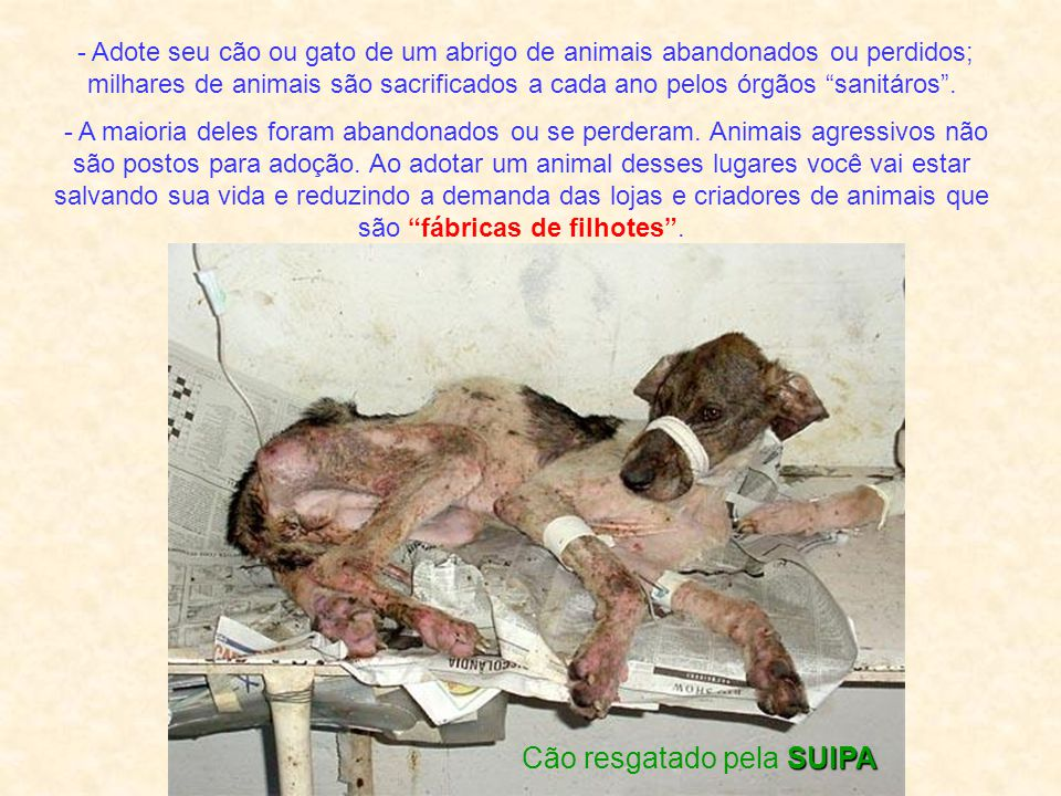 Cão resgatado pela SUIPA